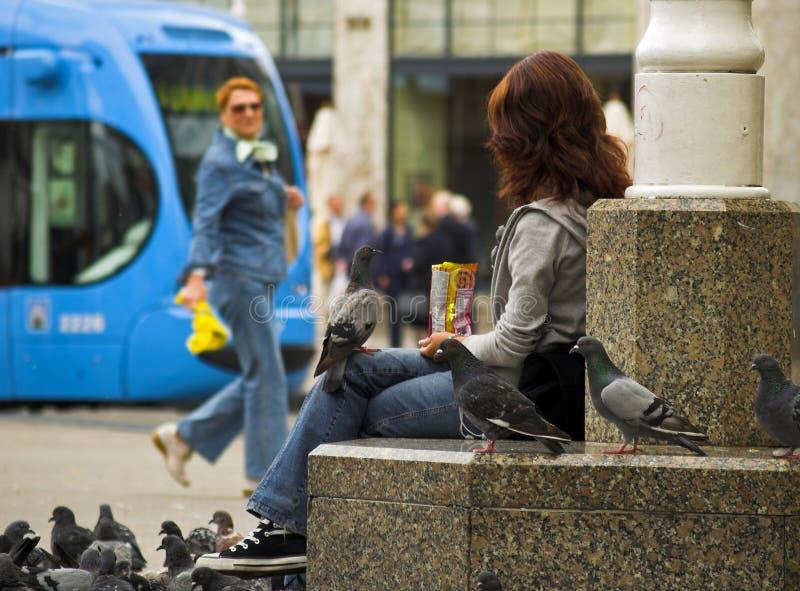 Pidgeon sur le genou de la fille photographie stock libre de droits