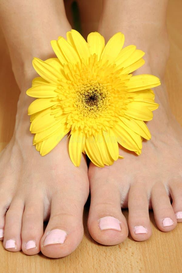 Pie con la flor imagen de archivo libre de regalías