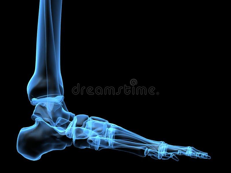 Pie de la radiografía ilustración del vector