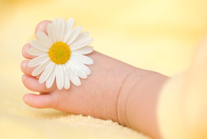Pie infantil encantador con la pequeña margarita blanca imagen de archivo libre de regalías