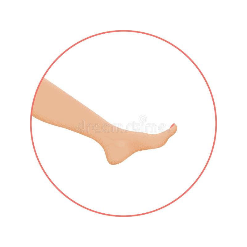 Pie sano en círculo con pedicura Ancle, rodilla y dedos del pie stock de ilustración
