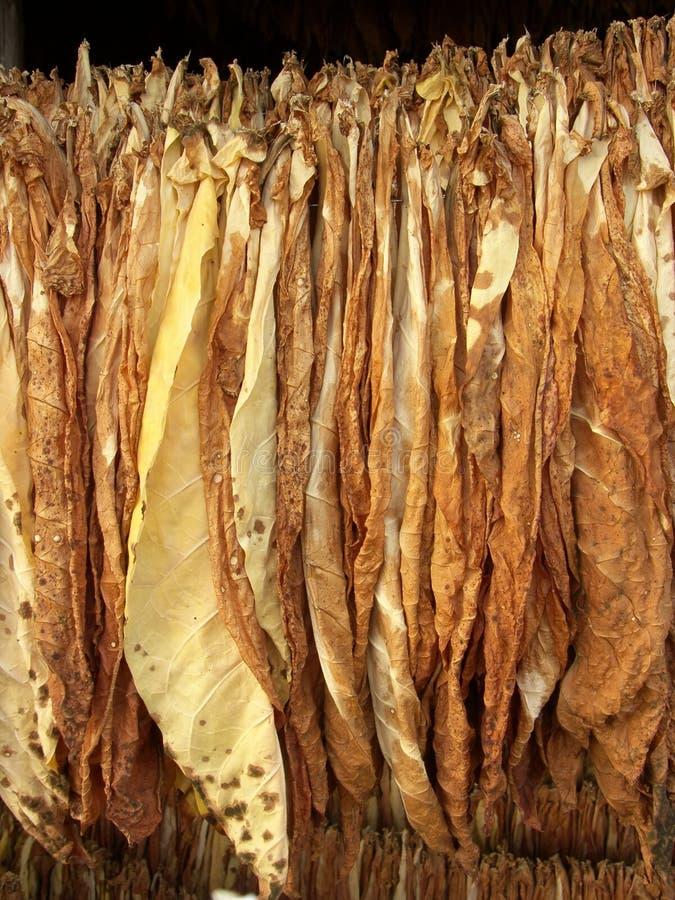 piec do suszenia liści tytoniu obraz royalty free