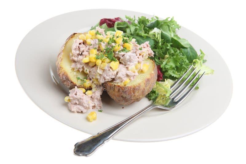 piec kartoflany tuńczyk obraz stock