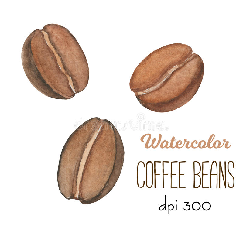 Piec kawowe fasole akwarelami na białym tle Ciemnego brązu kawowych fasoli clipart dla produktu projekta ilustracji