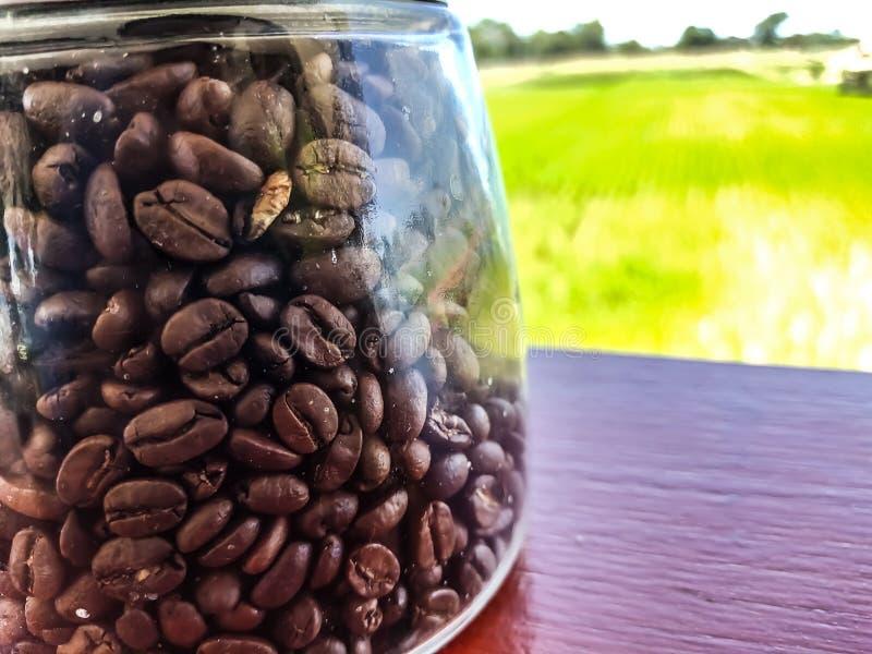 Piec kawowych fasoli butelki zieleni ryż obraz stock