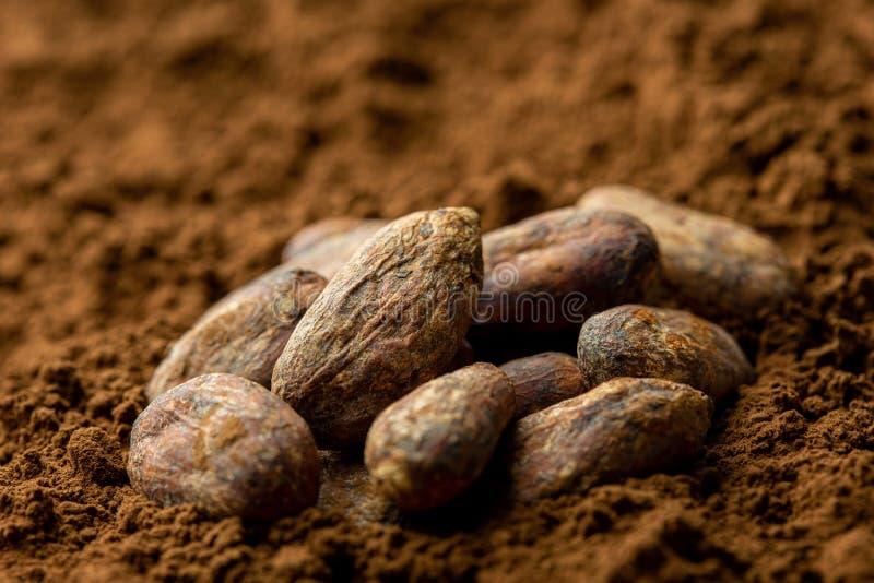 Piec unpeeled kakaowe fasole siedzi w kakaowym proszku zamazuj?cy t?o obraz royalty free