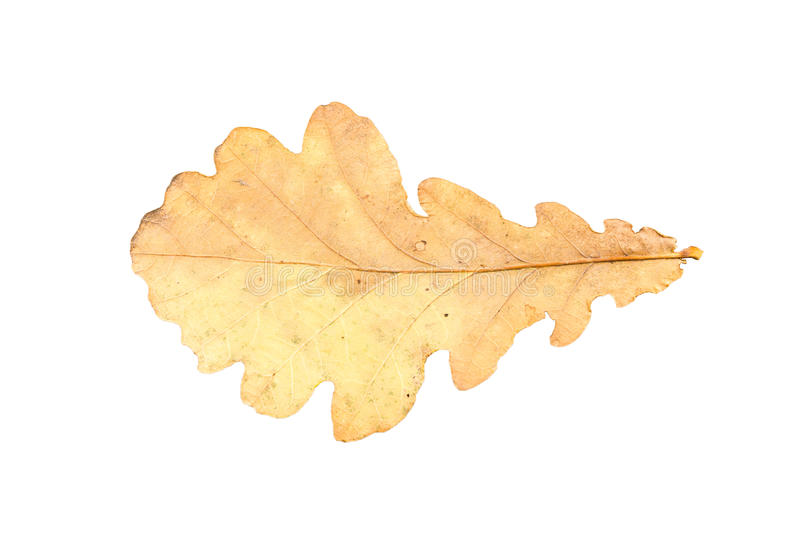 Piece of autumn leave withering in fall royalty free stock photography