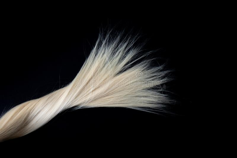 Piece of blond shiny hair texture on black. royalty free stock photos