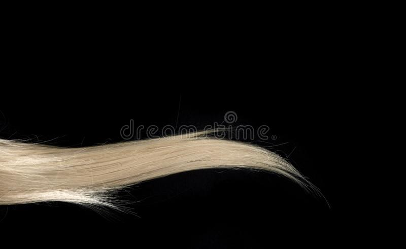 Piece of blond shiny hair texture on black. stock photos