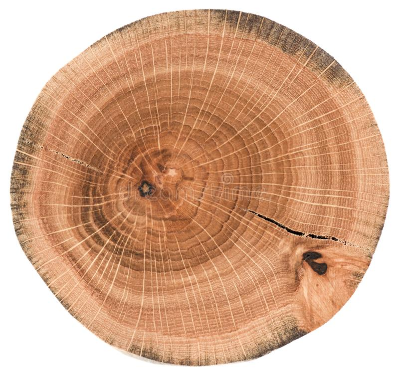Piece of circular wood slab with cracks and tree growth rings. Oak tree slice texture isolated on white background stock image
