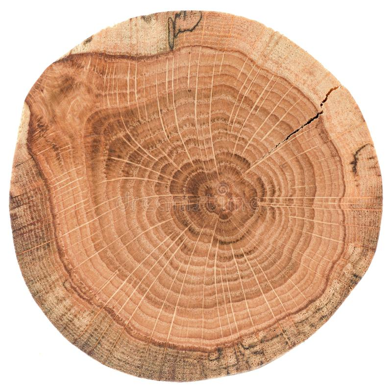 Piece of circular wood stump with cracks and growth rings. Oak tree slab texture isolated on white background. Overhead view stock photography