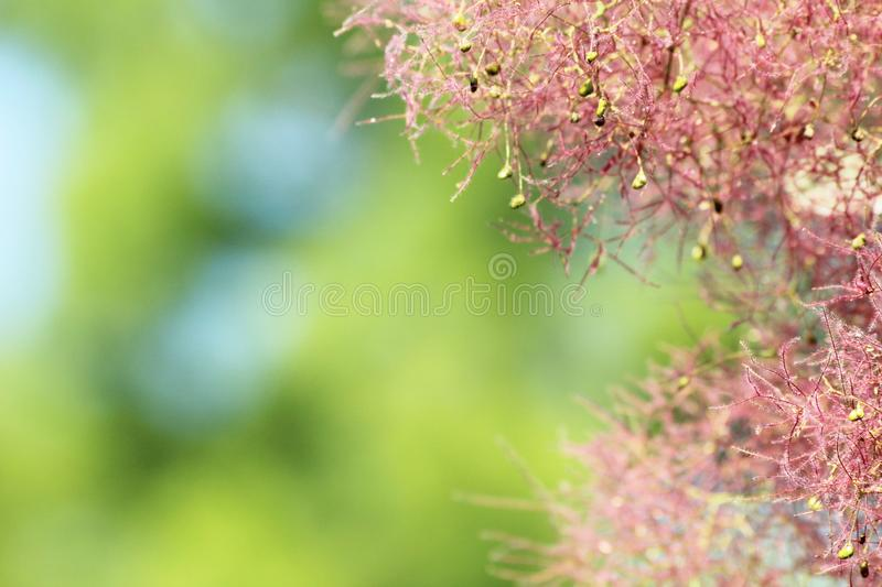 A piece of pink tree stock photography