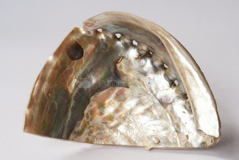Abalone Shell on white background stock photos