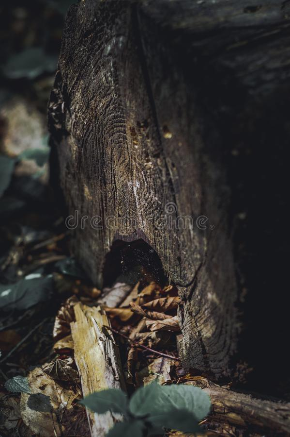 Piece of log wood in the forest. Shades of brown and dark colors. Piece of log wood in the forest. Shades brown and dark colors stock image