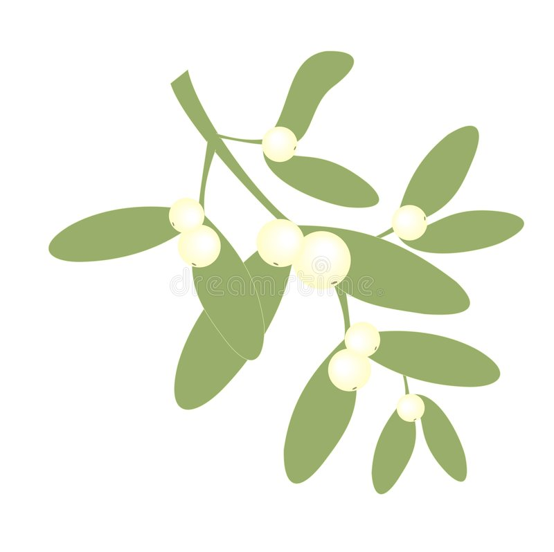 Piece of mistletoe stock illustration