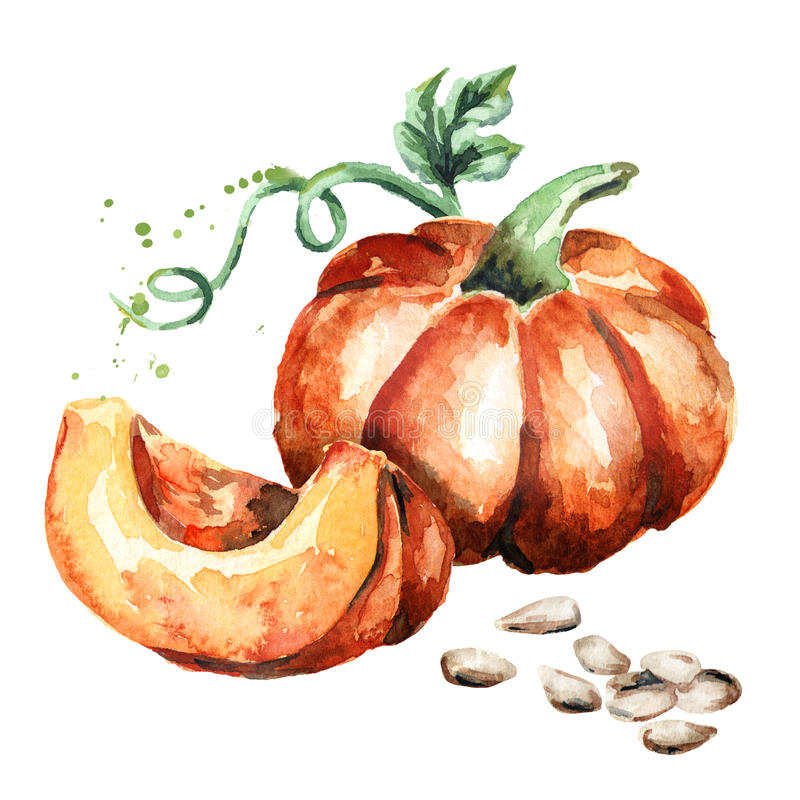 Piece of pumpkin with seeds. Watercolor royalty free illustration