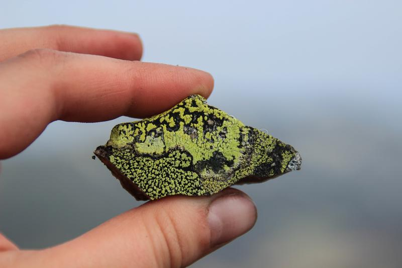 A piece of rock with a beautiful green mold stock photography