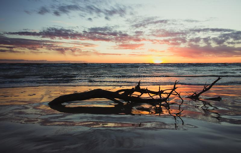 A piece of tree with branches half drowned in the ocean water during sunset royalty free stock image