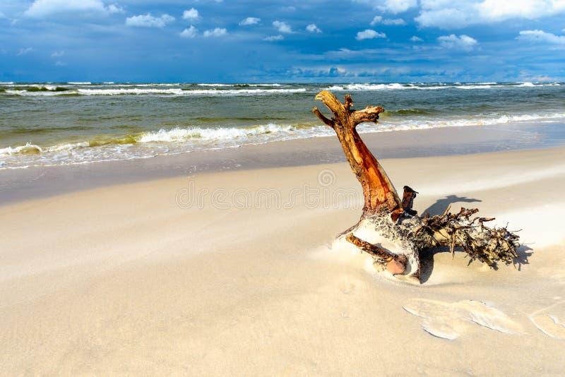 A piece of tree trunk thrown onto a seaside beach. A piece of tree trunk thrown onto a sandy seaside beach royalty free stock photos