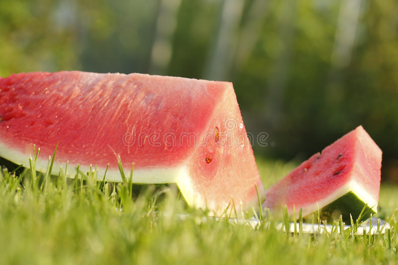 Piece of watermelon on a green grass royalty free stock photos