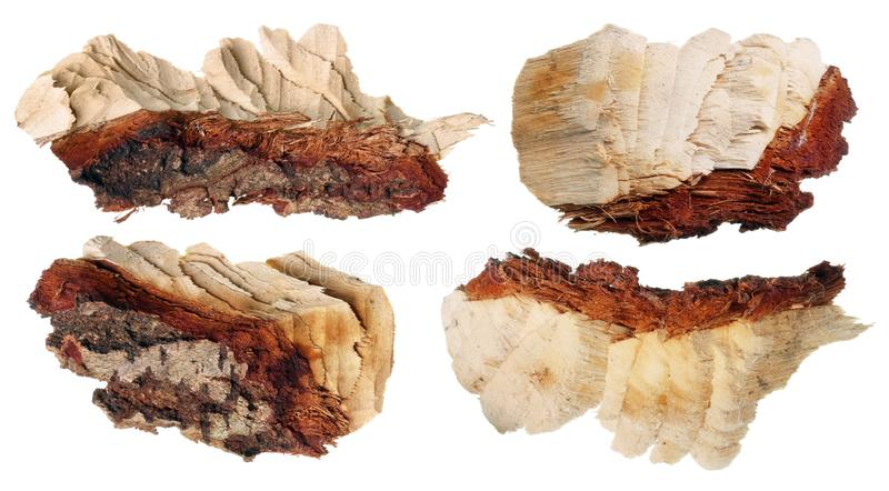 Pieces of alder and aspen wood with traces of teeth of the rodent beaver stock photos