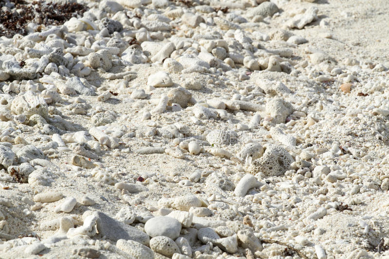 Download Pieces Of Coral On The Beach Stock Photo - Image: 28932482