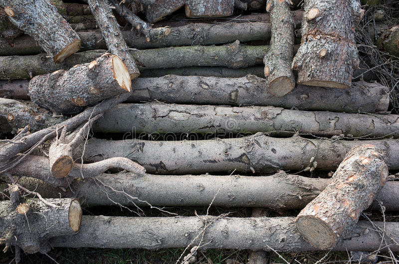 Pieces of cut wood royalty free stock image