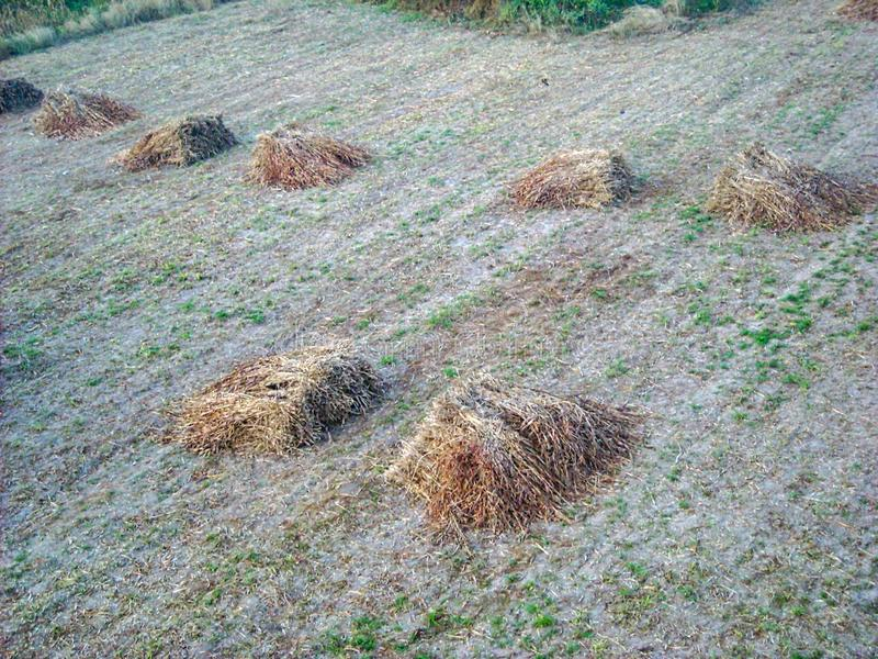pieces of hay on a field royalty free stock image
