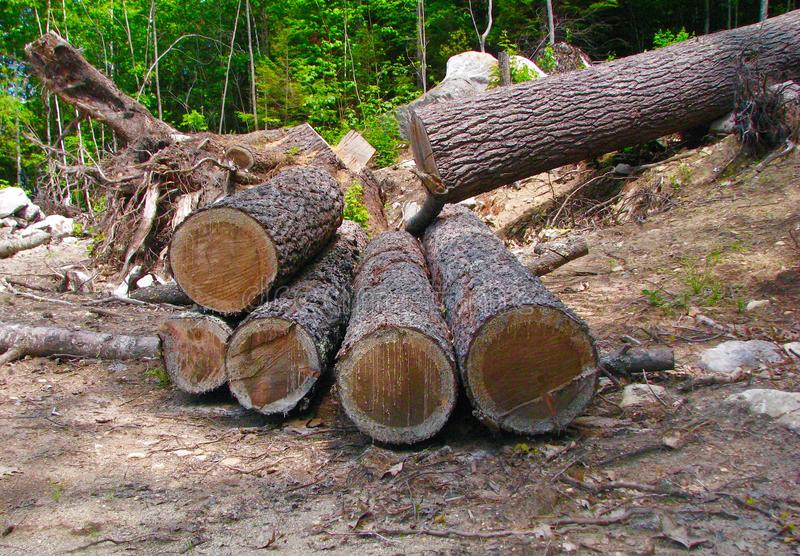 Tree cut in forest into logs carpentry builders building construction stock photos