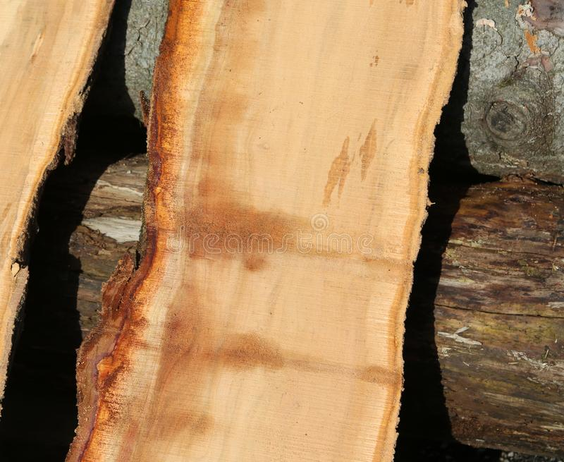 Pieces of tree trunk sawn in the sawmill. Pieces of tree trunk sawn perfectly in the sawmill royalty free stock photography