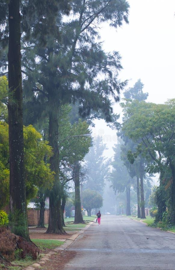 Piechur na mglistej ulicie pod drzewami zdjęcie royalty free