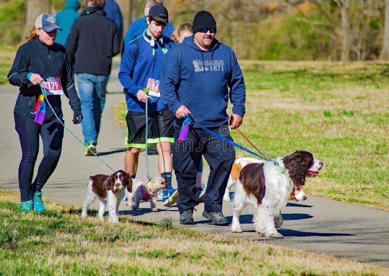 Piechurzy i biegacze z ich psami przy Roanoke doliny SPCA 5K ogonu łowcą zdjęcia royalty free