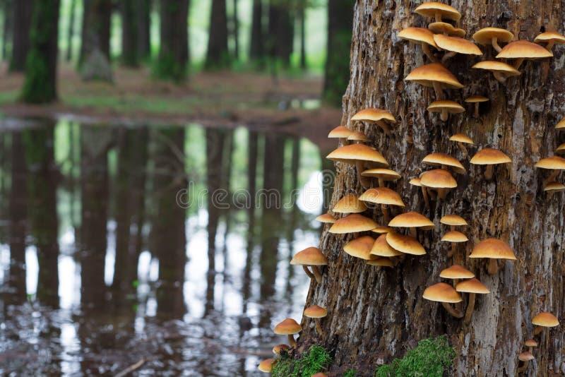 pieczarka na drzewie zdjęcie stock