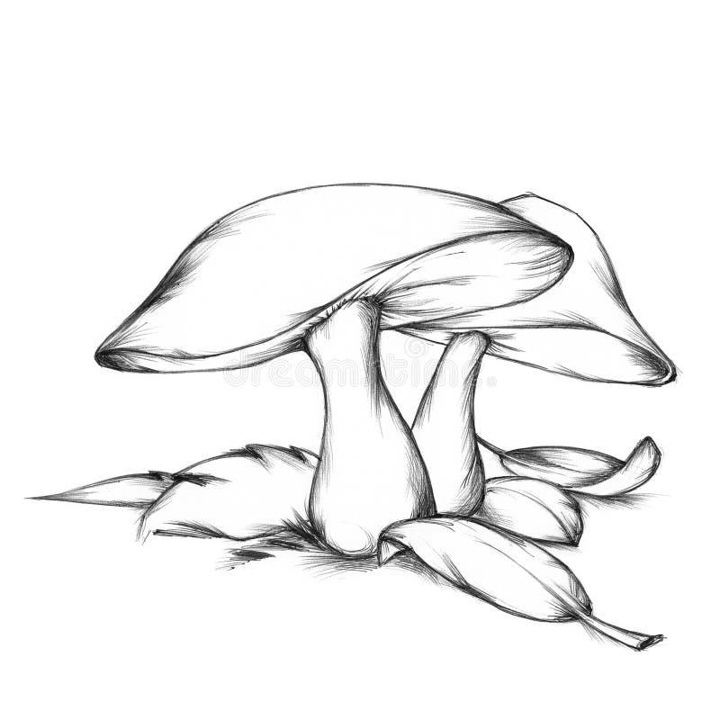 Pieczarki w lesie ilustracji