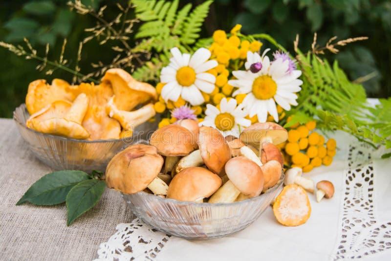 Pieczarki wazeliniarskie i chanterelles obrazy royalty free