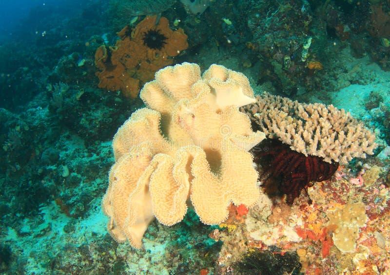 Pieczarkowy rzemienny koral zdjęcia stock