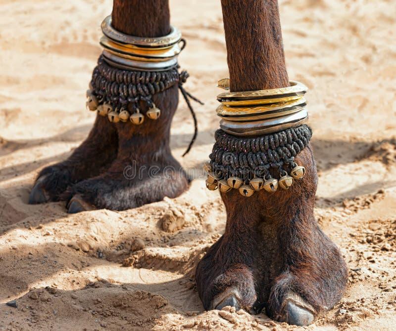 Pied décoré de chameau photo stock