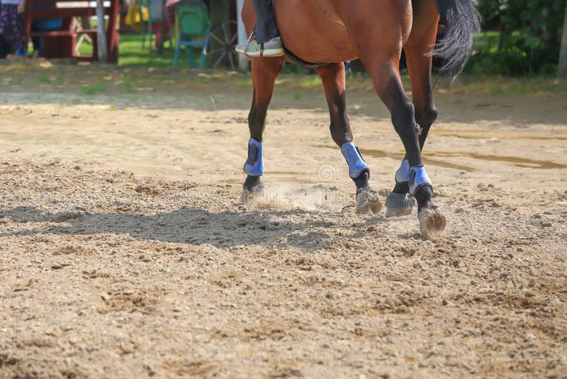 Pied de cheval fonctionnant sur le sable Fermez-vous de galoper de jambes image stock