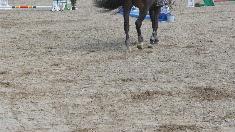 Pied de cheval marchant sur le sable Fermez-vous des jambes s'attaquant au sol au manege à la ferme Suivre pour l'étalon fin photos stock