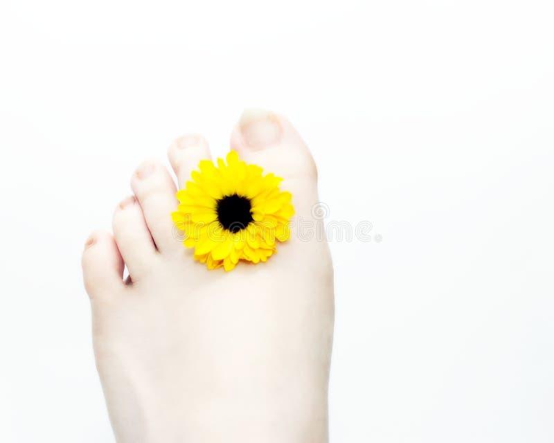 Pied et fleur photo stock