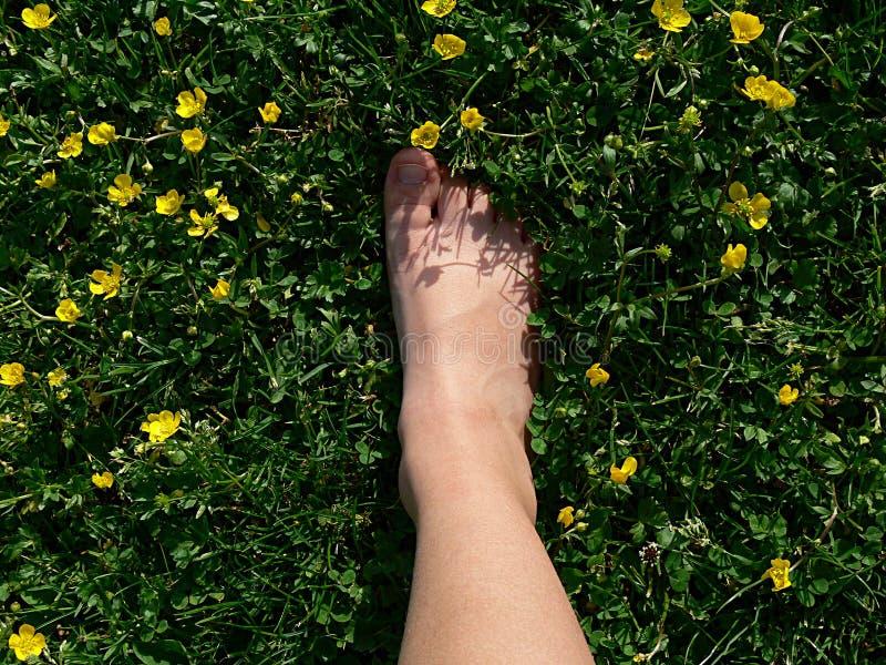 Pied faisant un pas sur l'herbe verte photos libres de droits