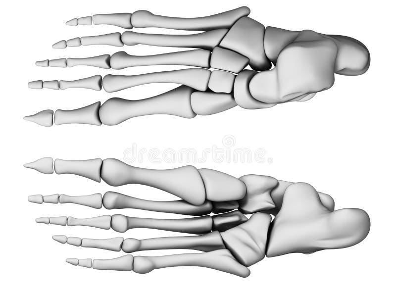 Pied squelettique illustration de vecteur