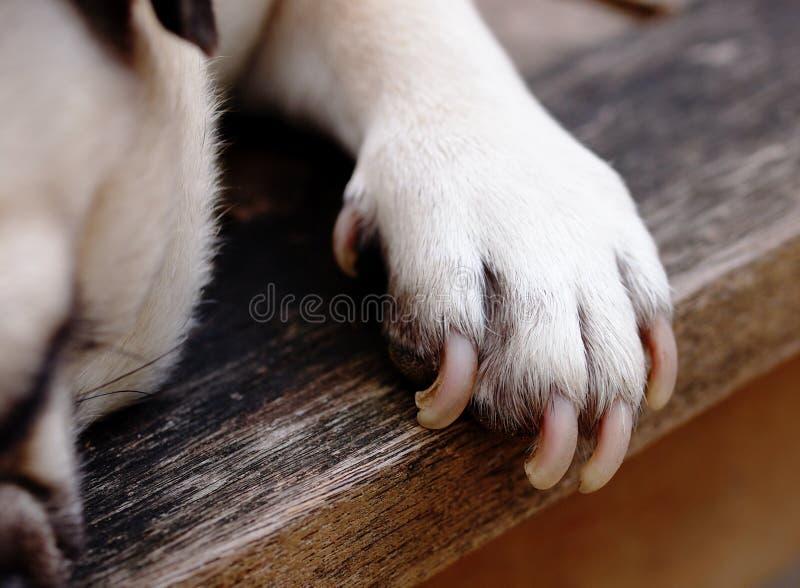 Download Piede del cane immagine stock. Immagine di grasso, nazionale - 55355097