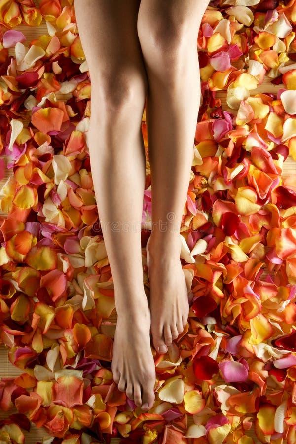 Piedi femminili sexy sui petali di rosa caduti fotografia stock