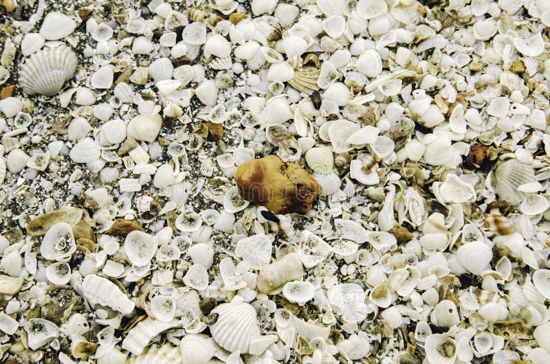 Piedra anaranjada del color y cáscara del mar blanco, fondo y texturas imágenes de archivo libres de regalías