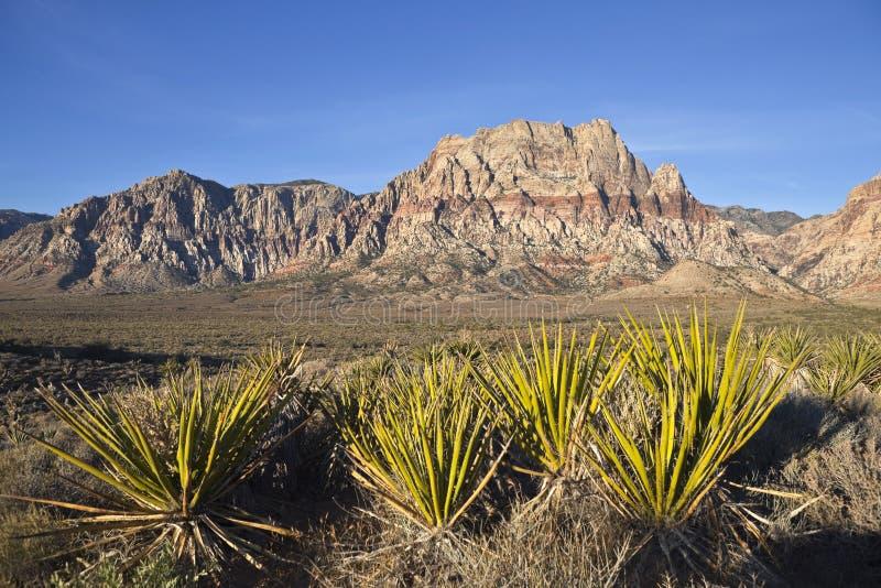 Piedra arenisca y yucas de Nevada fotografía de archivo