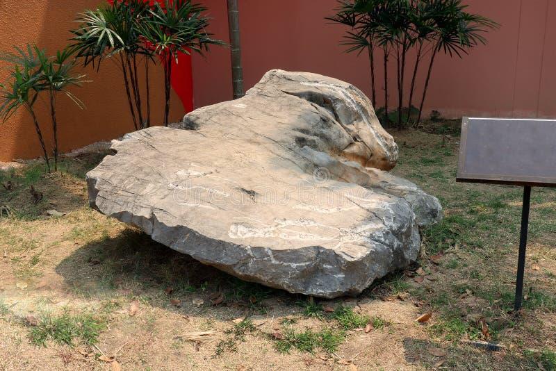 Piedra caliza: es una roca sedimentaria del carbonato en el campo de tierra fotos de archivo libres de regalías