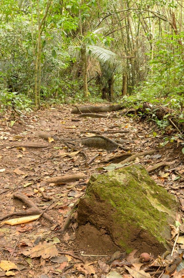Piedra con el musgo en los rastros del bosque imagenes de archivo