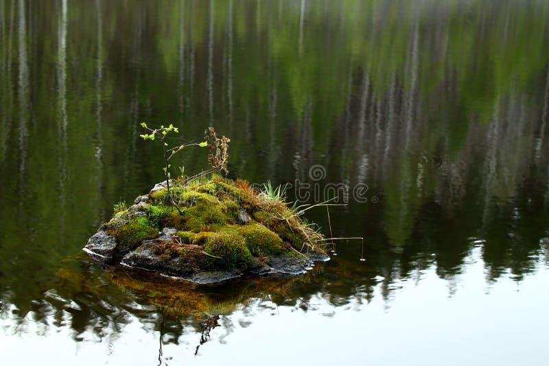 Piedra con el musgo y las hojas dentro del río foto de archivo