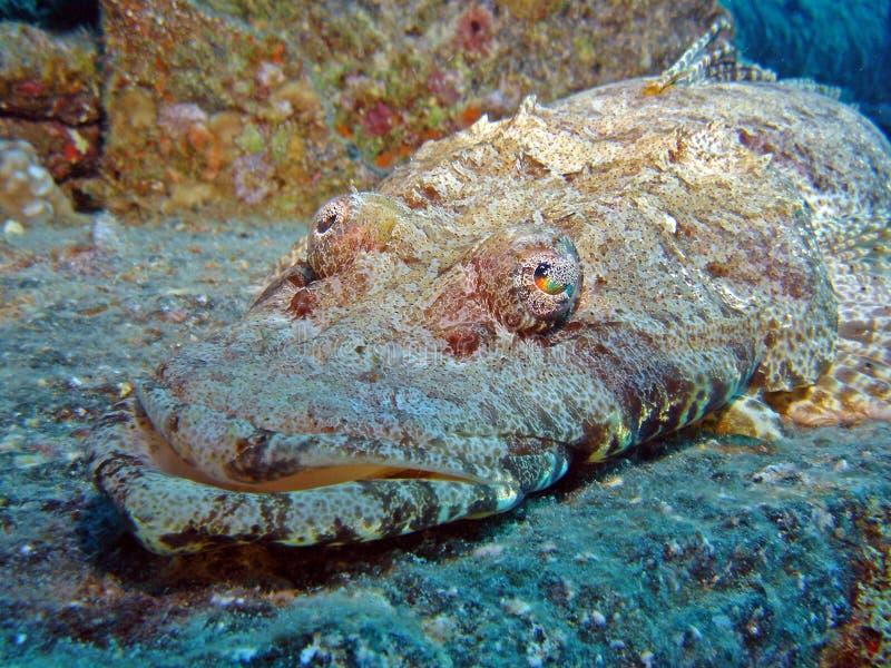 Piedra de los peces marinos fotografía de archivo libre de regalías